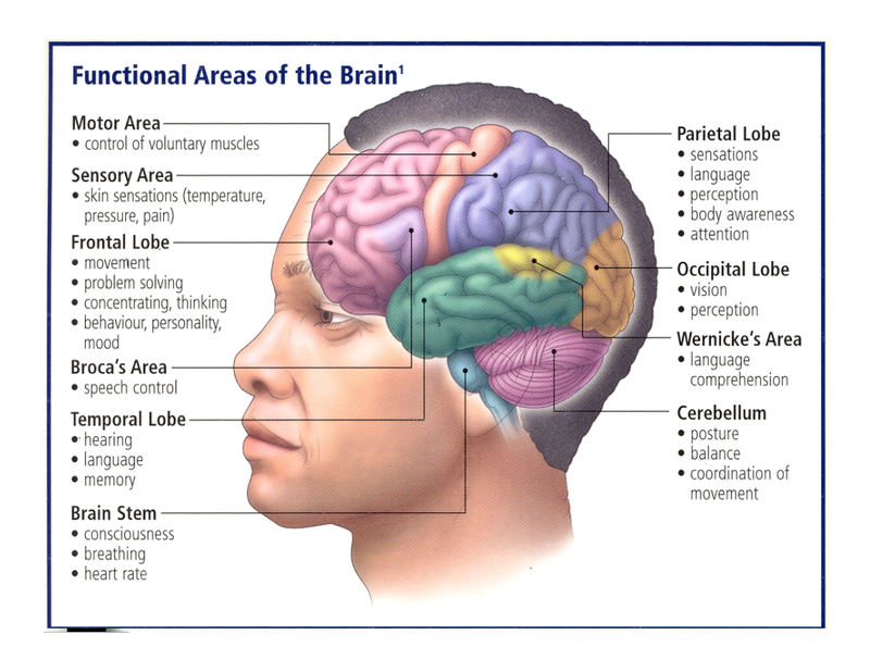 Eloquent areas of brain